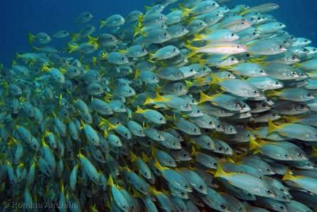 Cabo Verdemorro das pedras _0028