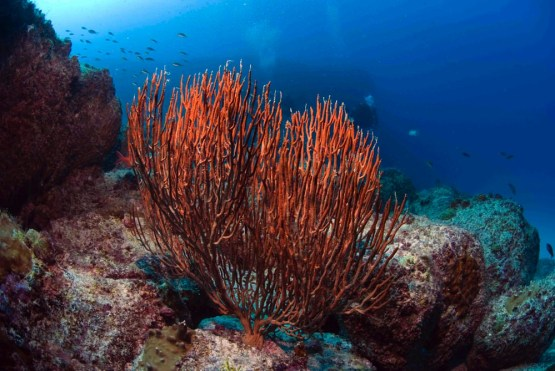 Dive sites 3grotes Cabo Verde8