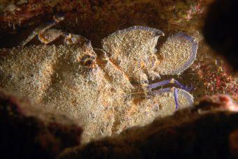 Dive sites Regona Cabo Verde1