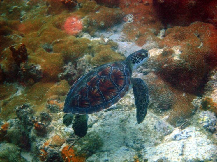 Dive sites ancora Cabo Verde4