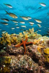 Dive sites cavala Cabo Verde8