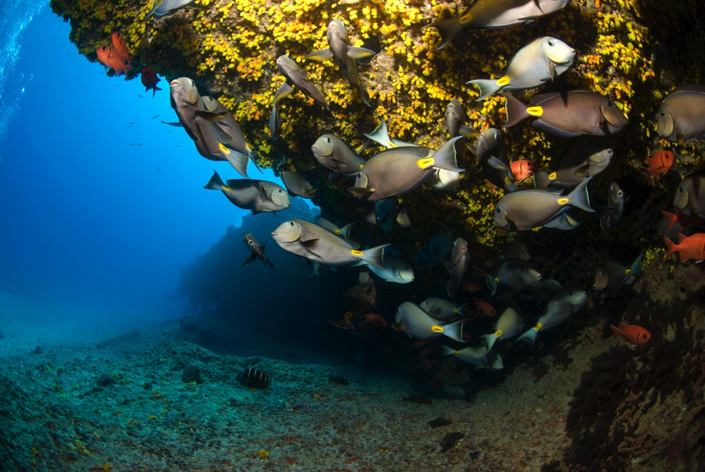 Dive sites choclassa Cabo Verde2