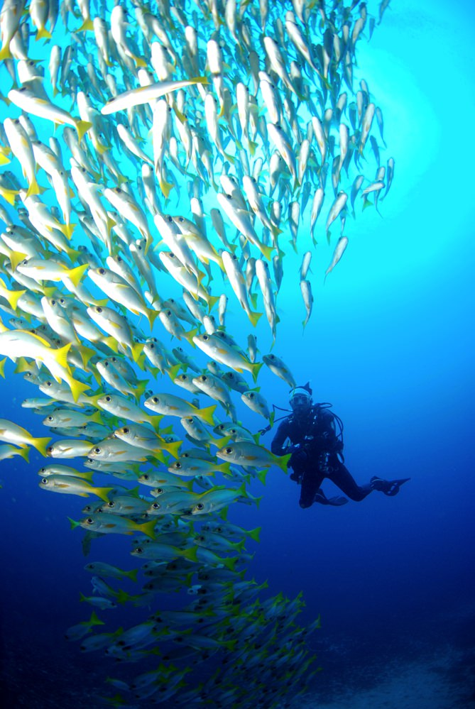 Dive sites choclassa Cabo Verde6