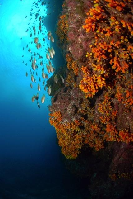 Dive sites dois olhos Cabo Verde8