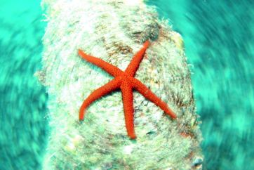 Dive sites farol Cabo Verde4
