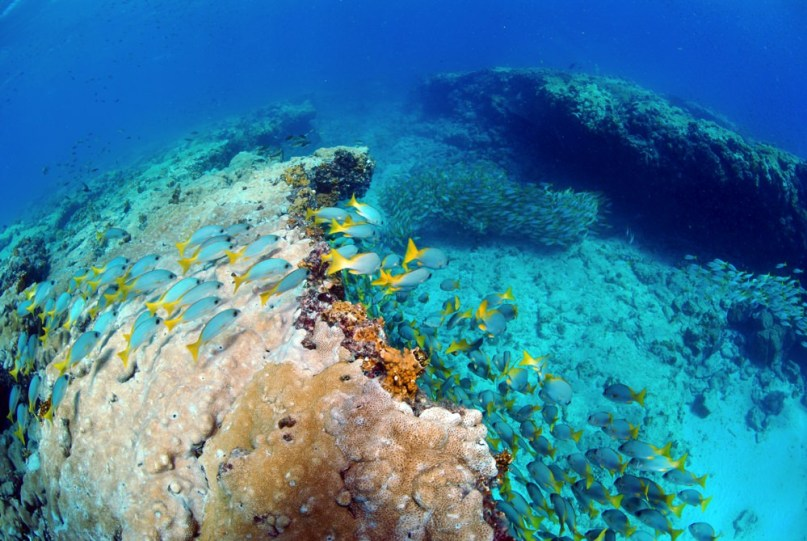 Dive sites farol Cabo Verde5