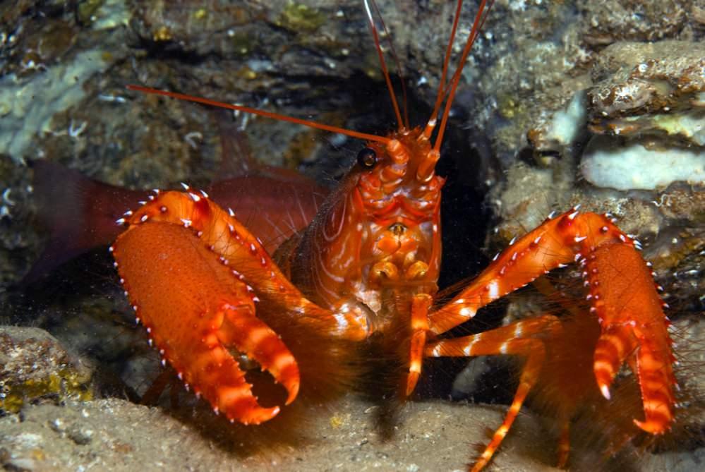 Dive sites farol Cabo Verde6