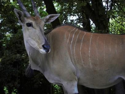 Safari Park (1)