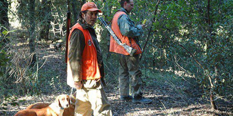 poste di caccia al cinghiale