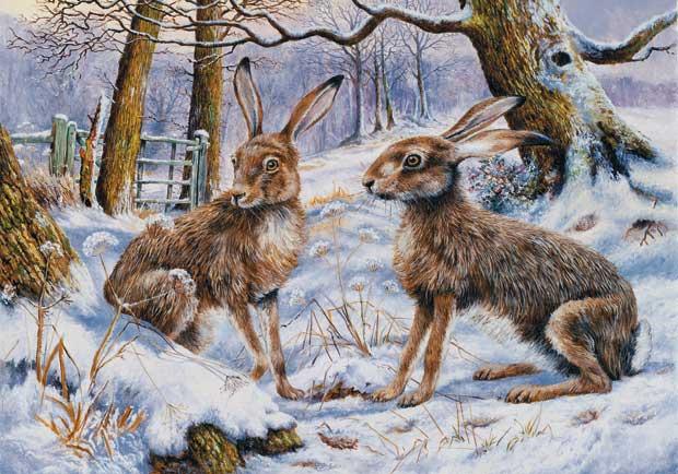 Cachet UK Ltd Hares In Winter Wildlife Christmas Card