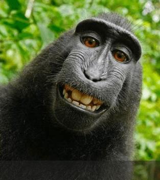 Mono Selfie2