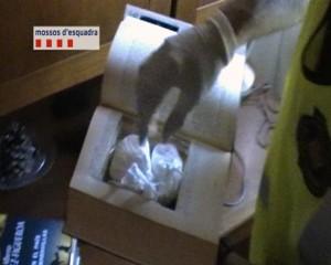 Cocaína intervenida a una banda que distribuía en Sant Martí