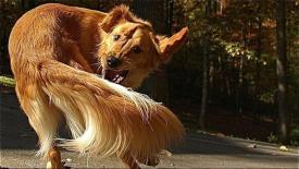 perro-cola