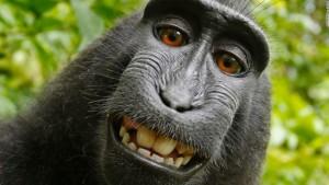 selfie-monkey