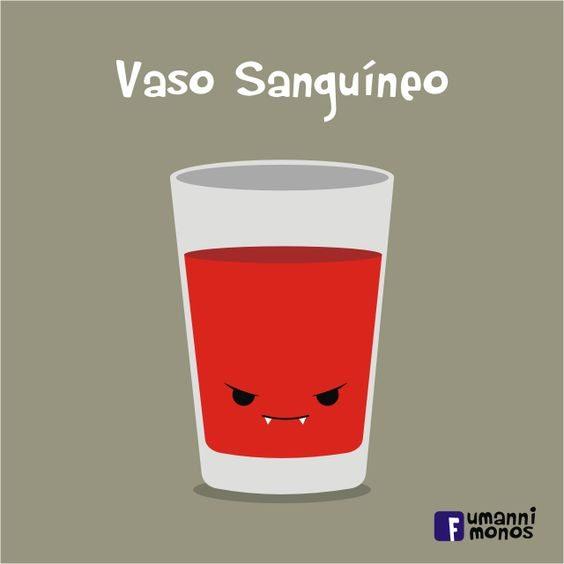 vaso-sanguineo