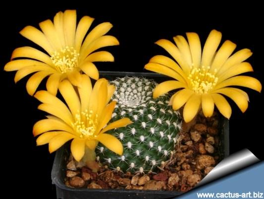 Cactus art gif