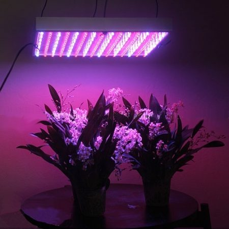 Led_grown_lights_useful