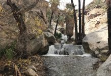 Murray Canyon Hike in Indian Canyons in Palm Springs