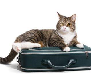 Cuidado de gatos a domicilio