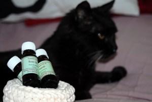 Aceites esenciales uso gatos