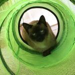Gato juguete tunel