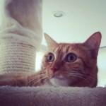 ¿por qué mi gato hace pis fuera del arenero