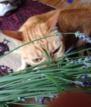 plantas para mi gato