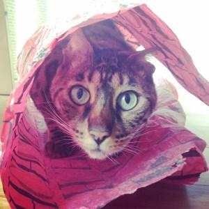 gato sorprendido