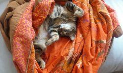 cuidados del gato