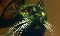 vivir con un gato, adoptar un gato
