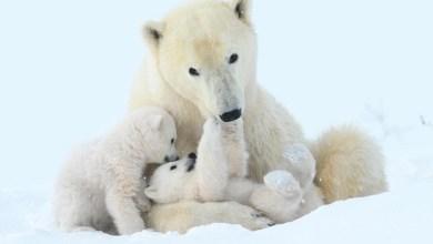 Photo of Día de la Tierra: 5 animales emblemáticos en peligro de extinción
