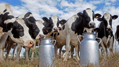 Photo of INTA y CONICET se unieron por la lechería nacional