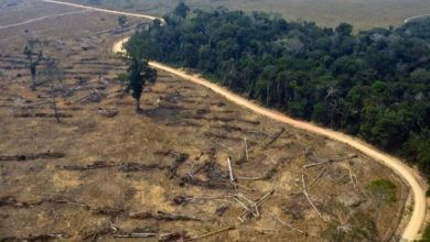 Photo of En casi 20 años, el Amazonas perdió el 8 por ciento de su territorio por la deforestación