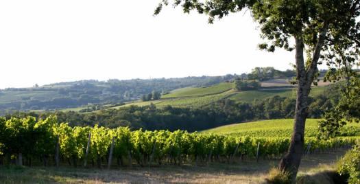 The vineyard of Cadillac Côtes de Bordeaux - Gironde