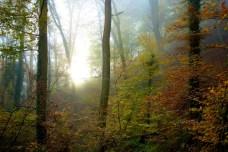 Mullertal Trail 1958