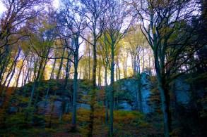 Mullerthal Trail