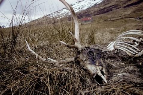Hiking Schotland 2399