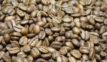 Café arábico