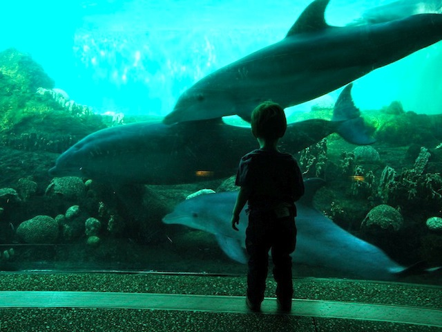 A linda foto do meu amigo Dan Berger em um dos aquários do Sea World