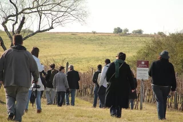 o grupo percorrendo os vinhedos