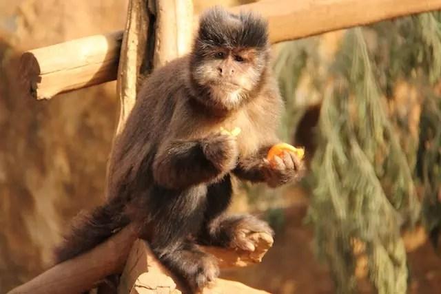 Gramado-Zoo12