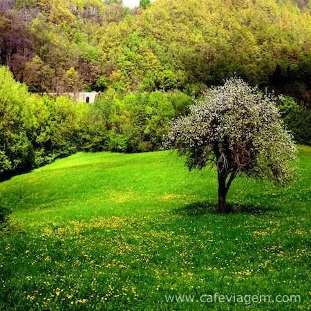 Montese Italia (11)