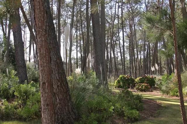 O bosque ao redor do hotel