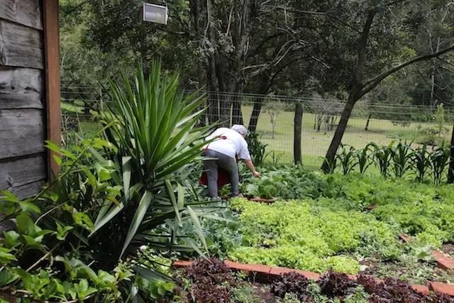 a horta do restaurante: da terra para a mesa!