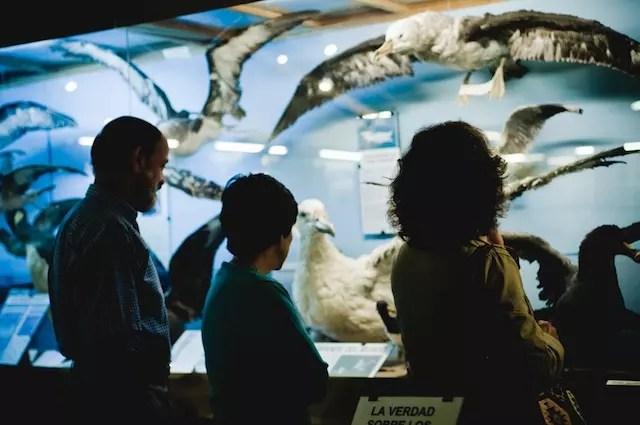 Foto site Museu do Mar