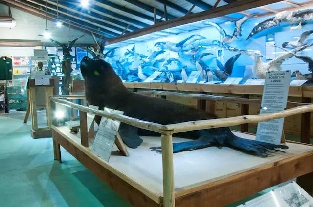 Foto arquivo Museu do Mar
