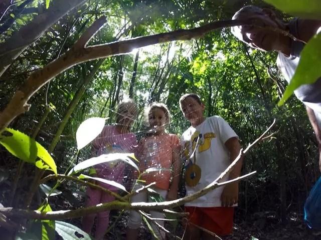 Gurizada na trilha do Morro dos Macacos. Foto: Jairo Gewehr Pereira