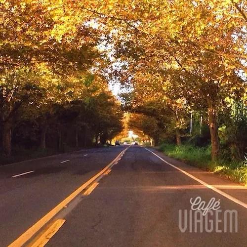 O túnel dourado da estrada!!!!