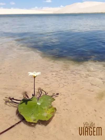 a flor solitária dando o toque final de beleza ao circuito singular dos Lençóis