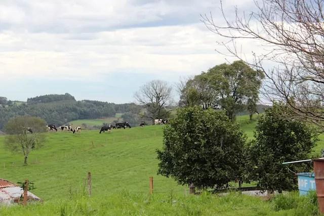 na área rural de Carlos Barbosa, região dos produtores de queijo